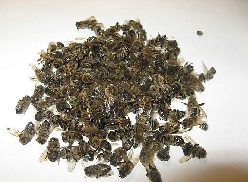 пчелы апитерапия для сжигания жира